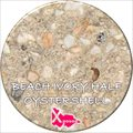 Beach Ivory Half Oyster Shell